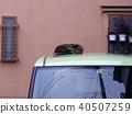 Kijima แมวนอนหลับอยู่บนรถ 40507259