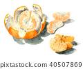 natsumikan, summer tangerine, peel 40507869