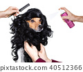 grooming dog at the hairdressers 40512366