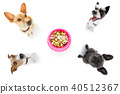 hungry  couple of dogs with food bowl 40512367