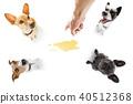 Urinary animal hand 40512368