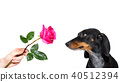 dog valentines rose 40512394