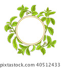 calorie, stevia, plant 40512433