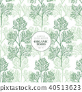 Parsley. Vector seamless pattern for design menu, packaging and recipes. Hand drawn vintage 40513623