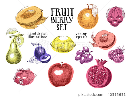 Fruits hand drawn vector illustration set. Retro engraved style illustrations. Can be use for menu 40513651