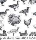 农场 鸟 禽 40513656