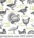 禽 动物 矢量 40514042