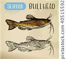 Sketch of bullhead or sculpin fish 40515592