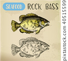 Rock bass or goggle-eye perch sketch 40515599