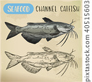 Channel catfish sketch. Seafood and fish 40515603