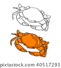 orange round crab vector illustration sketch  40517293
