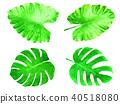 熱帶 葉 棕櫚樹 40518080
