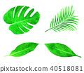 熱帶 葉 棕櫚樹 40518081