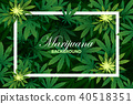 green cannabis leaf drug marijuana herb Background 40518351