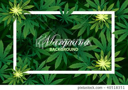 green cannabis leaf drug marijuana herb Background 40518351