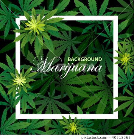green cannabis leaf drug marijuana herb Background 40518362