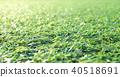 หญ้าเทียม 40518691