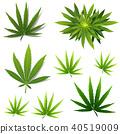 A set of cannabis icons, Marijuana leafs. 40519009