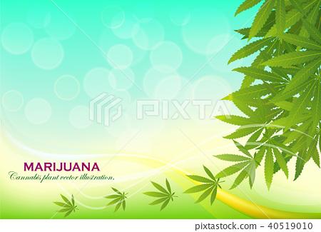 green cannabis leaf drug marijuana herb Background 40519010
