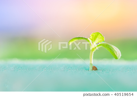 sprout of vegetables 40519654