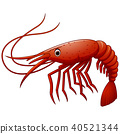 Cute shrimp cartoon illustration 40521344