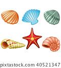 Sea shells and sea star 40521347