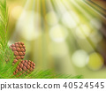 Pine Cone on Natural Green Background 40524545