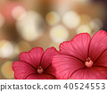 Hibiscus flowers on blur background 40524553