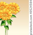 template, vector, sunflower 40524564