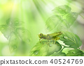Glasshopper on Plant Leaf Green Background 40524769