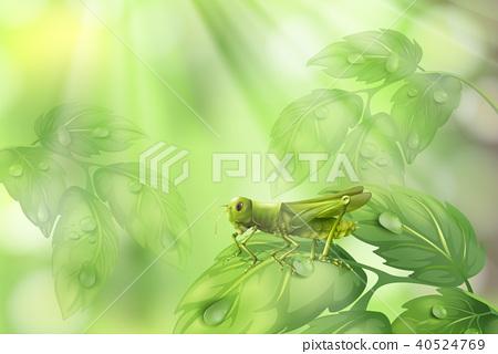 Glasshopper on Plant Leaf Green Background 40524769