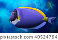 Blue Tang Fish in Ocean 40524794