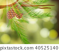 Pine Cone on Green Nature Background 40525140