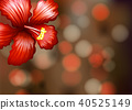 Red Hibiscus at the Corner Template 40525149