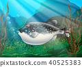 Puffer fish in under ocean 40525383