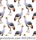 Black crowned crane (Balearica pavonina) standing. 40526532