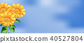 Beautiful Sunflower on Sky Background 40527804