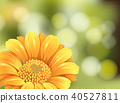 Beautiful Sunflower on Blur Background 40527811