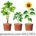 plant, flower, pot 40527852