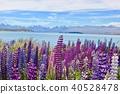 꽃, 플라워, 라벤더 40528478