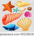 A Set of Seashell for Beach 40528658