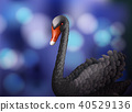 Black Swan on Blur Blue Background 40529136