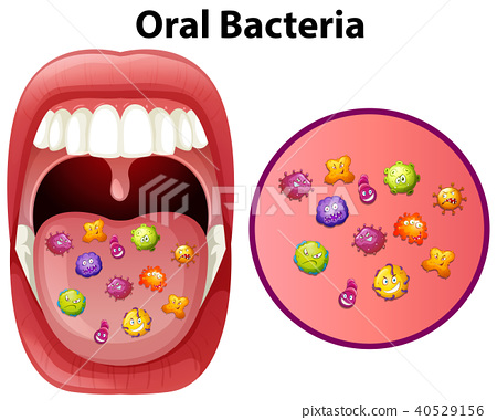 An Image Showing Oral Bacteria 40529156