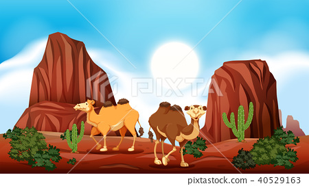 Rock Mountain in Desert and Camels 40529163