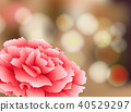 Carnation Flower on Nature Background 40529297