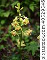 꽃, 플라워, 초여름 40529546