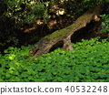 green leaves, arboreal, park 40532248