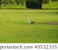 park, parks, lawn 40532335