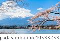 벚꽃, 후지산, 가와구치 호수 40533253