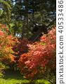 봄, 진달래, 철쭉 40533486